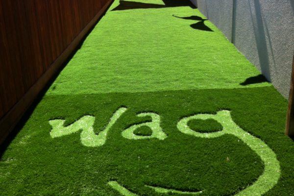 ARTIFICIAL GRASS FOR DOGS - WAG PET HOTEL - SAN FRANCISCO CALIFORNIA