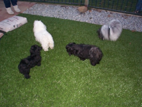 Artificial Turf For Dogs  A Great Solution For Your Pups. High Back Dining Chairs. Bubble Tile. Bookcase Headboard. Lights With Pull Chain. Wood Wall Tiles. Funky Furniture. Channel Glass. Curtains Over Blinds
