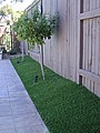 artificial grass for dogs, synthetic turf for dogs, fake lawn for dogs