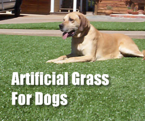 Artificial Grass For Potty Training Dogs