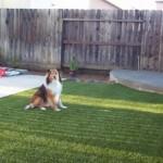 artificial-grass-dogs-sacramento (68)