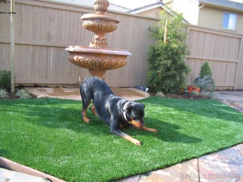 artificial grass for pets. Artificial Grass For Dogs Pets