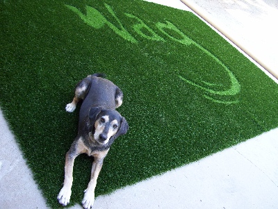WAG PET HOTEL - ARTIFICIAL GRASS FOR DOGS