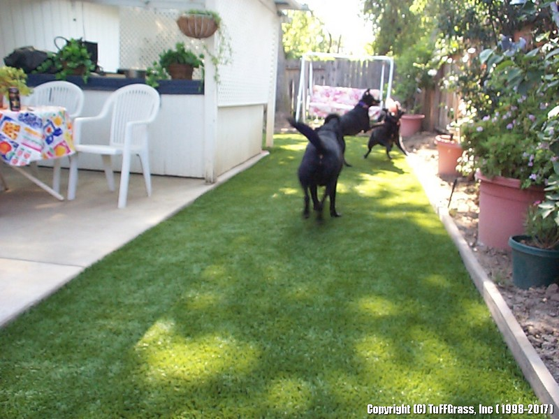 ARTIFICIAL-GRASS-DOGS-YARDS-KENNELS (15)