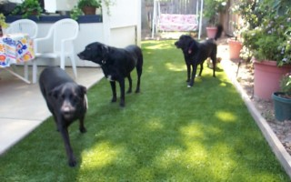 ARTIFICIAL-GRASS-DOG_lawn