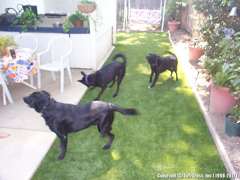 ARTIFICIAL-GRASS-DOGS-YARDS-KENNELS (17)