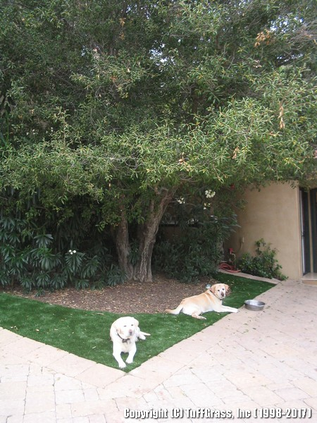 ARTIFICIAL-GRASS-DOGS-YARDS-KENNELS (2)