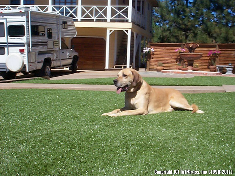 ARTIFICIAL-GRASS-DOGS-YARDS-KENNELS (5)