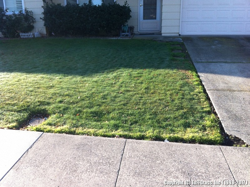 ARTIFICIAL-TURF-GRASS-FROM-TUFFGRASS (29)