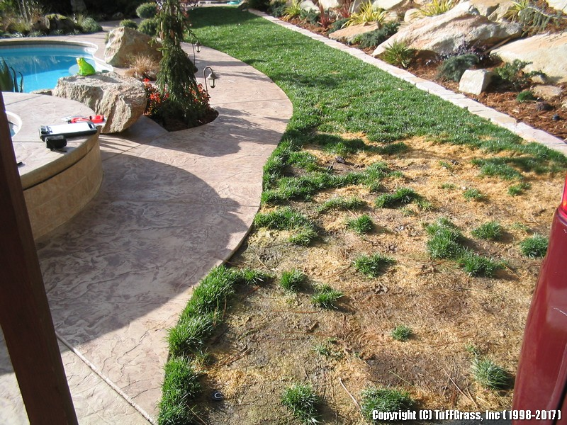 artificial-grass-large-dog-yard-pool-party (0)