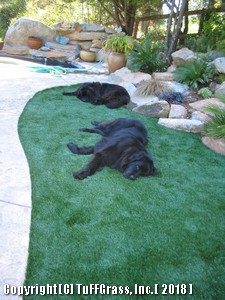 K9-GRASS-DOG-YARD-MAKEOVER 2