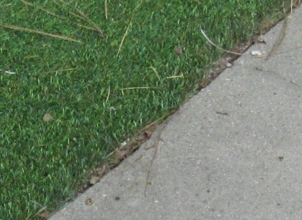 Artificial grass lawn edge against a driveway showing weeds and dirt - how to use weed barrier fabrics to avoid