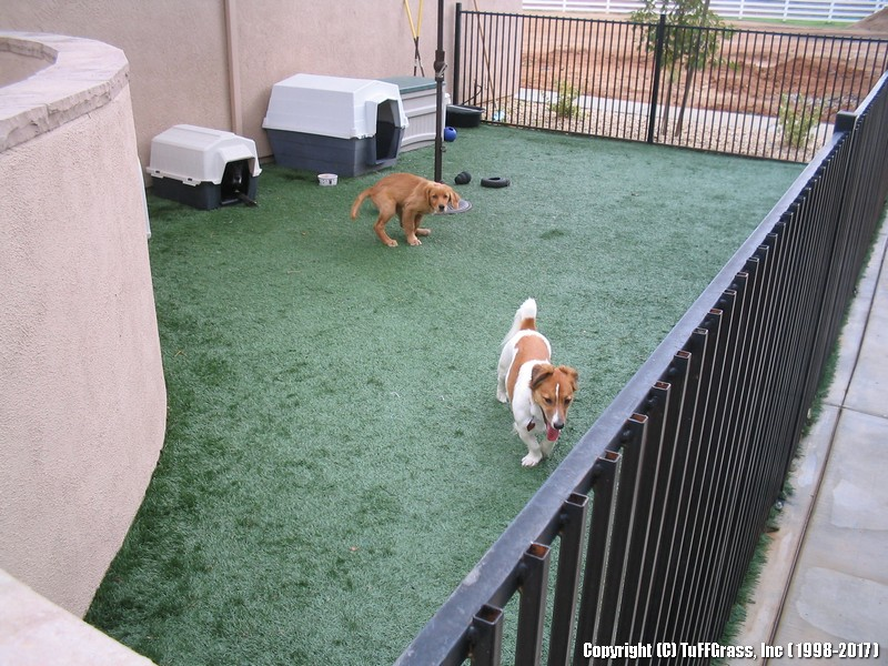 Artificial Turf For Dogs A Great Solution Your Pups