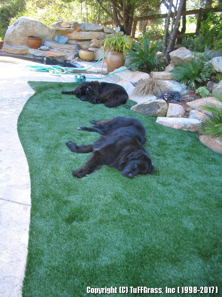 Dog Run With Artificial Turf